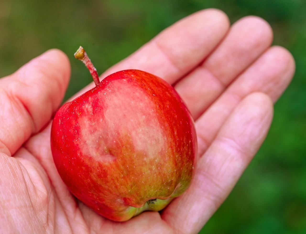 Avviso pubblico per l\'adozione di misure urgenti di solidarietà alimentare